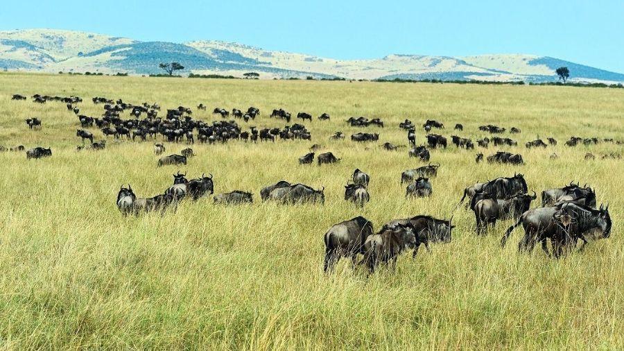 The Best Safari Destinations in Africa