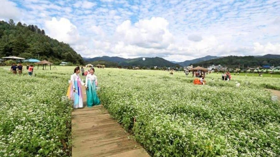 Bongpyeong-Cultural-Festival