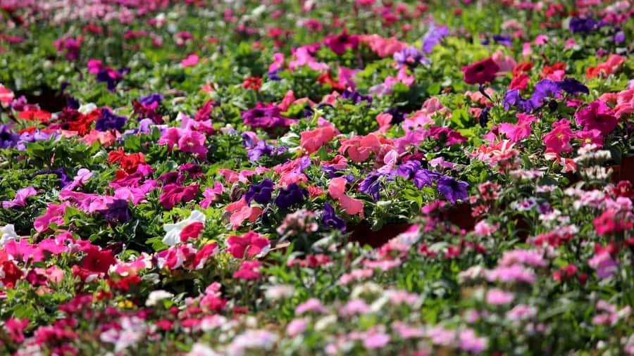 Bloom-Festival